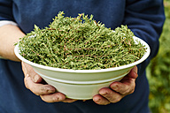 Woman holding bowl of freshly harvested common thyme - HAWF000812