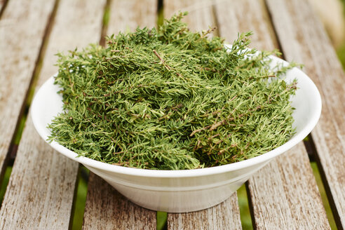 Bowl of freshly harvested common thyme - HAWF000813