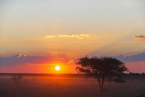 Namibia, Etosha National Park, sunset - FOF008111