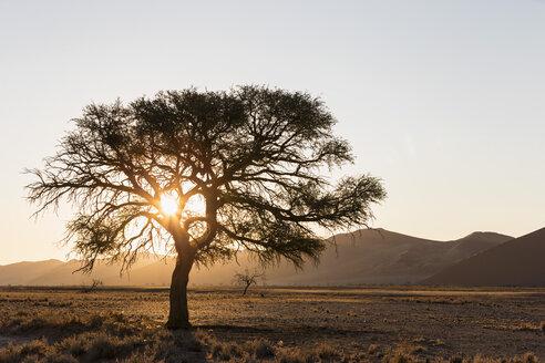 Namibia, Namib Desert, Namib Naukluft National Park, dried out river bed of Tsauchab - FOF008177
