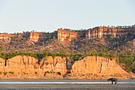 Zimbabwe, Masvingo, Gonarezhou National Park, African elephant in front of Runde River and Chilojo Cliffs - FOF008215