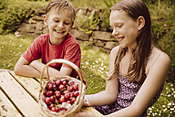 Girl and boy looking at a basket of cherries in garden - MFF001882