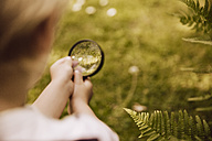 Boy looking through magnifier on fern leaf - MFF001893