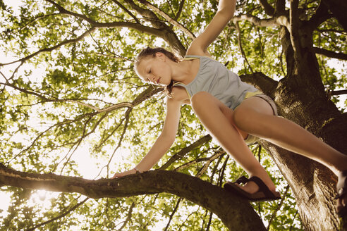 Girl climbing through the branches of a tree - MFF001909