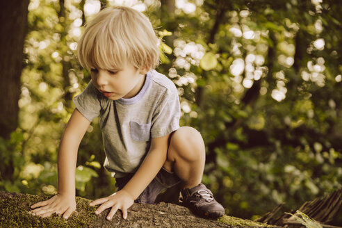 Boy climbing along fallen tree in forest touching moss - MFF001923
