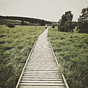 Belgium, High Fens, wooden boardwalk - GWF004317
