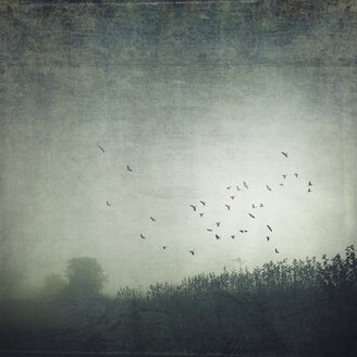Field and flying birds in the fog, textured effect - DWI000548
