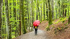 Germany, Bavaria, Allgaeu, woman witn red umbrella on forest track - WGF000686