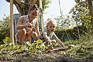 Happy mother and son harvesting radishes in vegetable garden - RHF000985