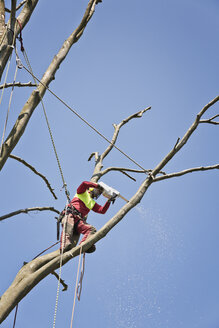Worker secured with ropes pruning a tree with electric saw - MEMF000885