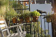 Germany, Balcony with chair and potted herbs - RIBF000154
