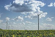 Sunflower field and wind farm - ASCF000265
