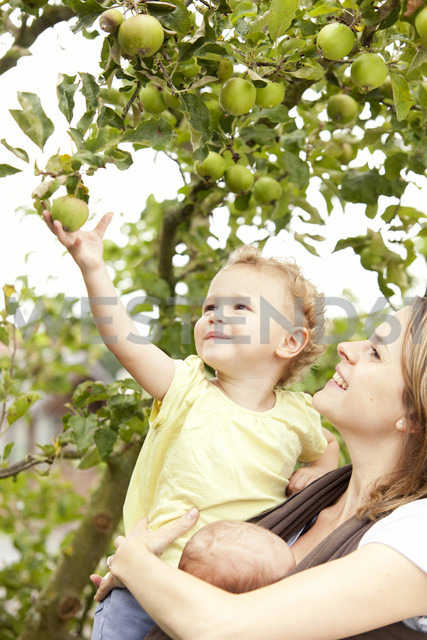 Little girl picking an apple from tree with mothers help - MFRF000316
