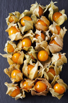 Physalis on slate - CSF025966