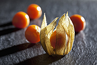 Physalis on slate - CSF025968