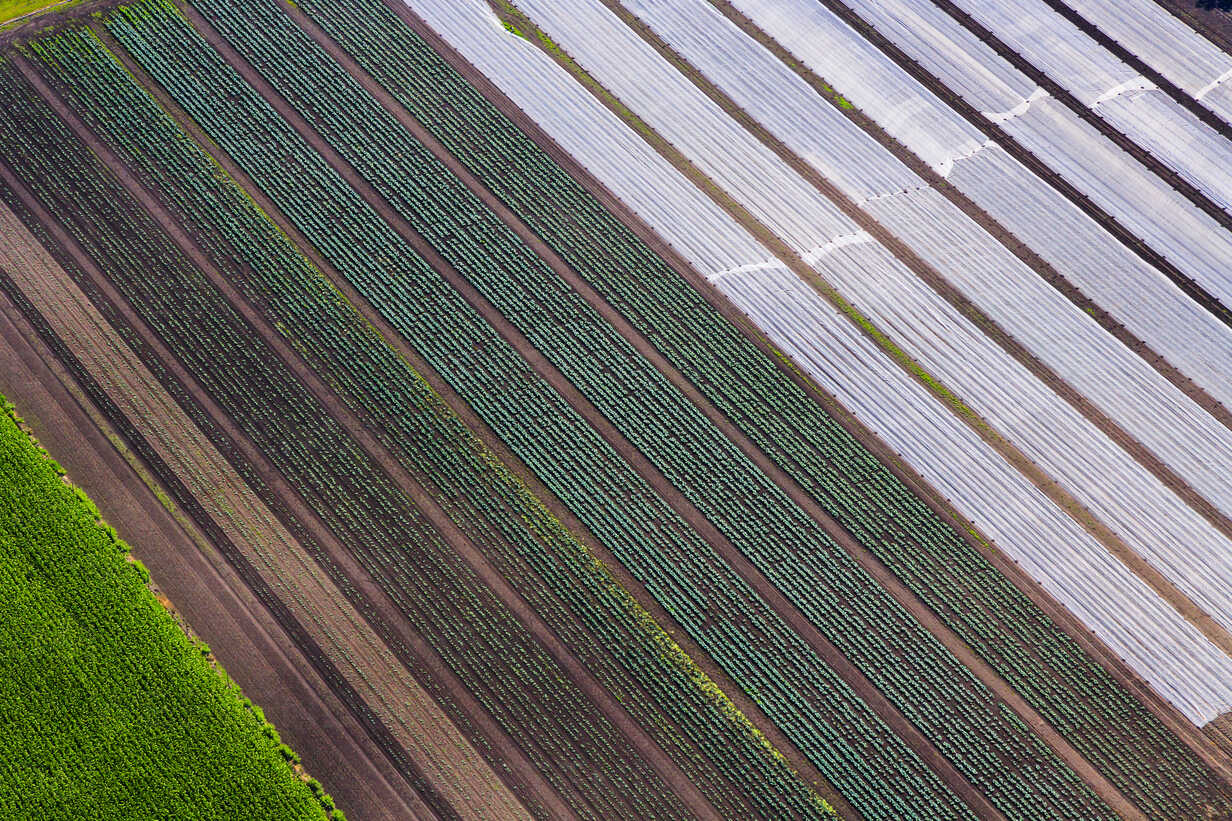 Germany, Bavaria, View of fields, aerial view - PEDF000118 - Delta Image/Westend61