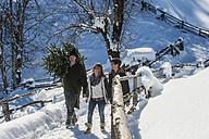 Austria, Altenmarkt-Zauchensee, man with couple carrying Christmas tree in winter landscape - HHF005393
