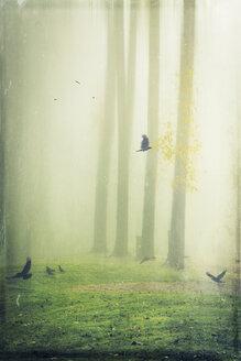 Hooded crows on meadow, foggy, digitally manipulated - DWI000556