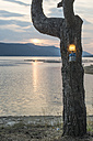 Bulgaria, Rhodope Mountains, gas lamp hanging on tree trunk at Dospat Reservoir by sunset - DEGF000505