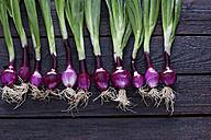 Row of red spring onions on dark wood - CSF026164
