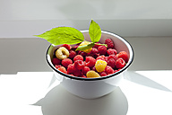 Bowl of red and yellow raspberries on window sill - CSF026112
