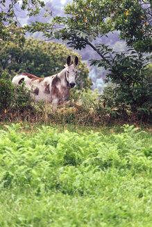 Spain, Gijon, portrait of a donkey - MGOF000453