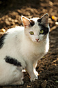 Portrait of cat with green eyes - BZF000201