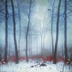 Foggy winter forest, digitally manipulated - DWI000568