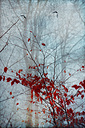 Red autumn leaves and flying birds, digitally manipulated - DWIF000562