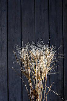 Barley, Hordeum vulgare, and rye, Secale cereale, on wood - CSF026245
