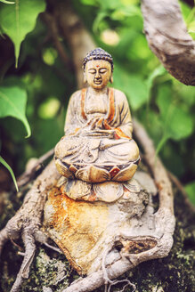Buddha wood statue on a bonsai - EHF000186