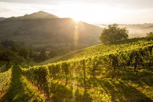 Austria, Styria, Leutschach, vineyards at wine route - AIF000002