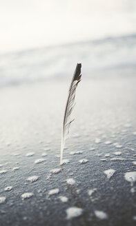 Seagull feather stuck in the wet sand of the beach - RAEF000344