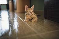 Portrait of kitten lying on the floor - RAEF000352