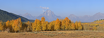 USA, Wyoming, Jackson, Mount Moran and fall colored Aspens at Grand Teton National Park - RUEF001625