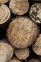 Cut surfaces with annual rings of logs - ASCF000341
