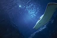 Stingray in aquarium - BZF000248