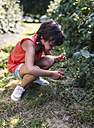 Little girl picking berries in the garden - MGOF000574