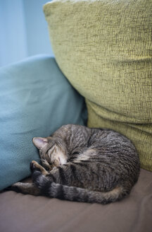 Tabby cat sleeping in the corner of a couch at home - RAEF000452