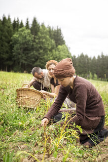 Three people harvesting potatoes by hand - MIDF000620