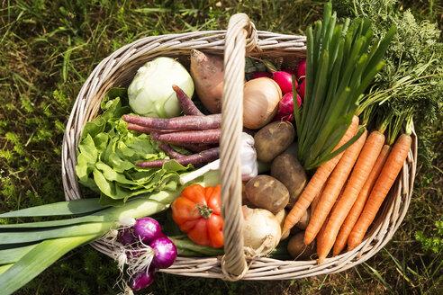 Basket full of organic vegetables - MIDF000637