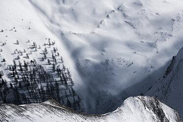 Austria, Tyrol, Ischgl, trees in winter landscape - ABF000669