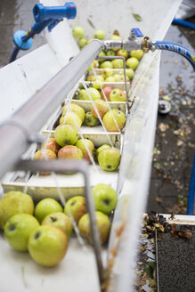 Apples in a mobile squeezer - TKF000414