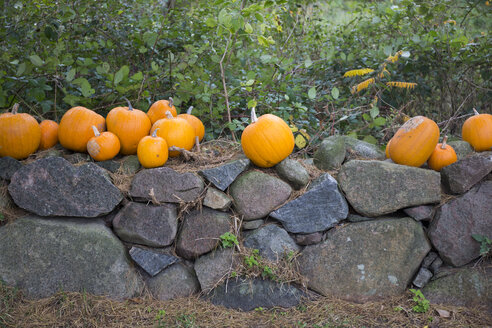 Pumpkins on a  stone wall - TKF000417