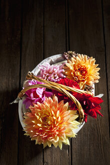 Colourful dahlia, blossoms in basket on wood - CSF026299