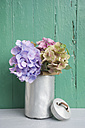 Old milk can with blossoms of hydrangea - GISF000158