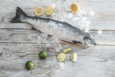 Raw salmon with ice, lime and lemons - DEGF000528