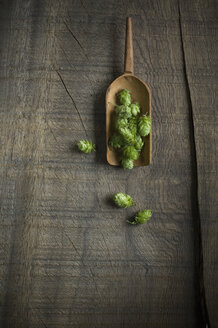 Hop and wooden shovel on dark wood - ASF005693
