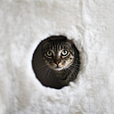 Portrait of a cat looking through hole of a scratching post - RAEF000498