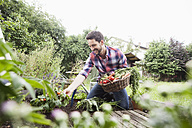 Man gardening in vegetable patch - RBF003139